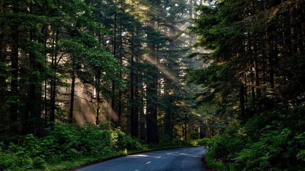 Výzva pre vlastníkov lesných pozemkov, ktorí požiadali o navrátenie užívacích práv